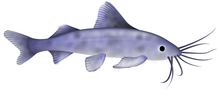 Can Algae Eaters Eat Normal Fish Food